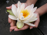 Picture of lotus flower in hands